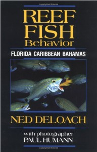 reef fish behavior
